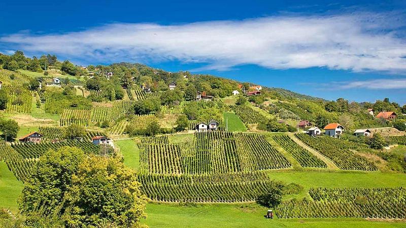 Wines of Zagorje